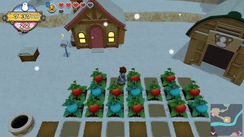 Harvest Moon: One World Icy Tomato